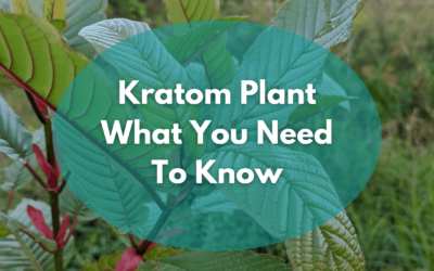 Kratom Plant Care And Information