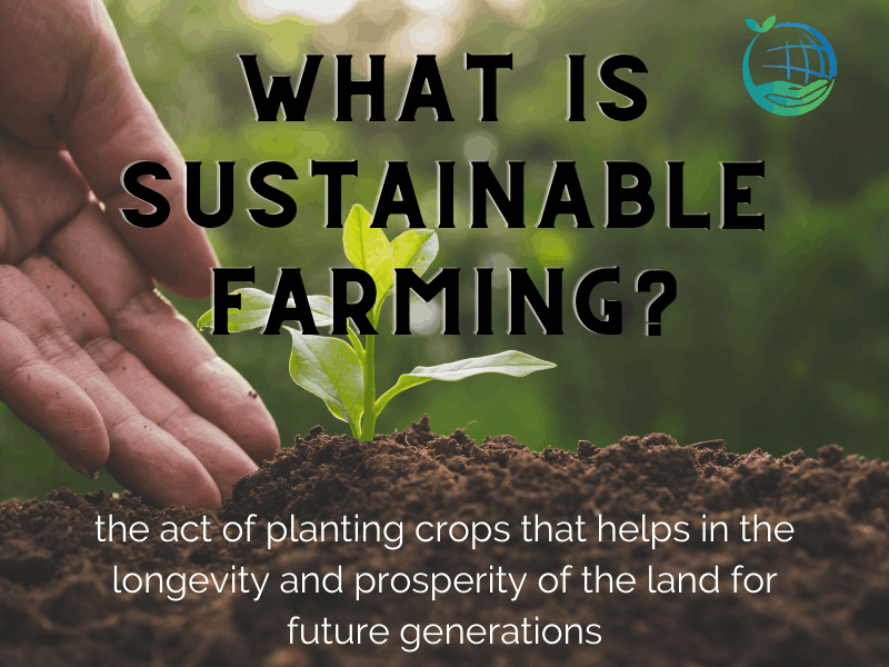The Importance Of Farming Sustainably & Ethically
